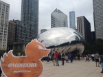 Puck the Muck Duck in Chicago