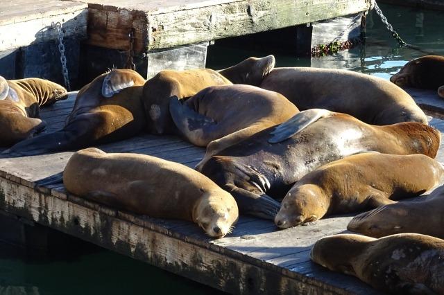 sea-lion-1053350_1280.jpg